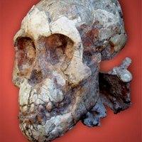 Древние люди начали есть мясо раньше, чем предполагали ученые