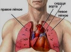 Факты о сердце