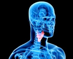 Гипотиреоз: правильное или избыточное лечение?