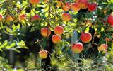 Самый главный фрукт: чем полезны яблоки?