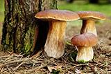 Полезны ли грибы?