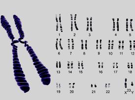 «Женские» Х-хромосомы могут играть определенную роль в выработке спермы