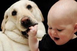 Собака — лучший друг ребенка, так как приносит в дом иммуностимулирующую грязь