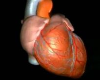 Метаболический стресс увеличивает риск развития предсердной аритмии