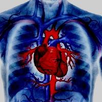 Обнаружены причины повышения уровня холестерина
