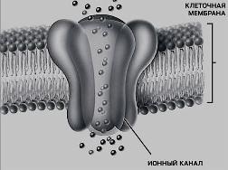 Короткое замыкание в ионном канале усиливает боль