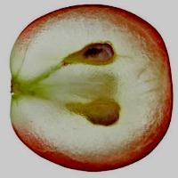 Экстракт виноградных косточек разрушает норовирусы