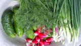 Перші овочі: користь чи шкода?