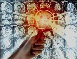 Обнаружена область мозга, которая имеет большое значение для социальной памяти