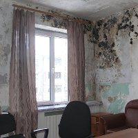 Причина токсичности плесени в помещениях
