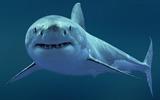 Акула-каракула