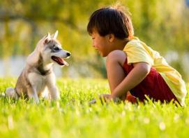 Наличие собаки в доме связано со снижением риска развития экземы у детей