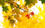 Осенние прелести