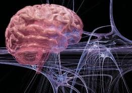 Структура мозга определяет чувствительность к боли