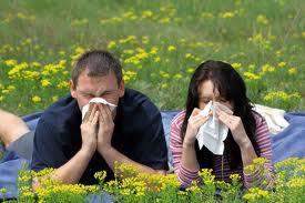 Американские ученые: аллергия сезона 2011 — самая сильная за последние 7 лет