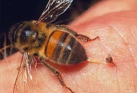 Укус осы может привести к анафилактическому шоку